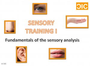 sensory-training-i