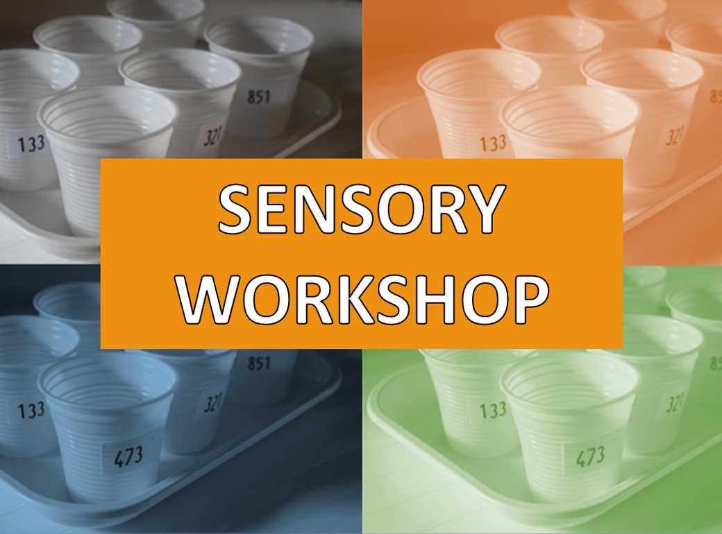 Sensory Workshop